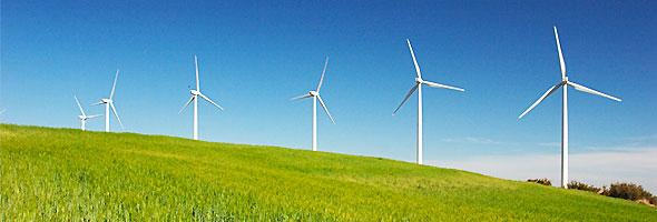 L'ecologia con economia al verde