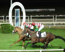 Xilofoni Equestri