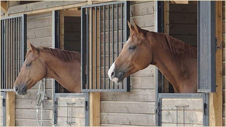 scuderie-cavalli_ng2